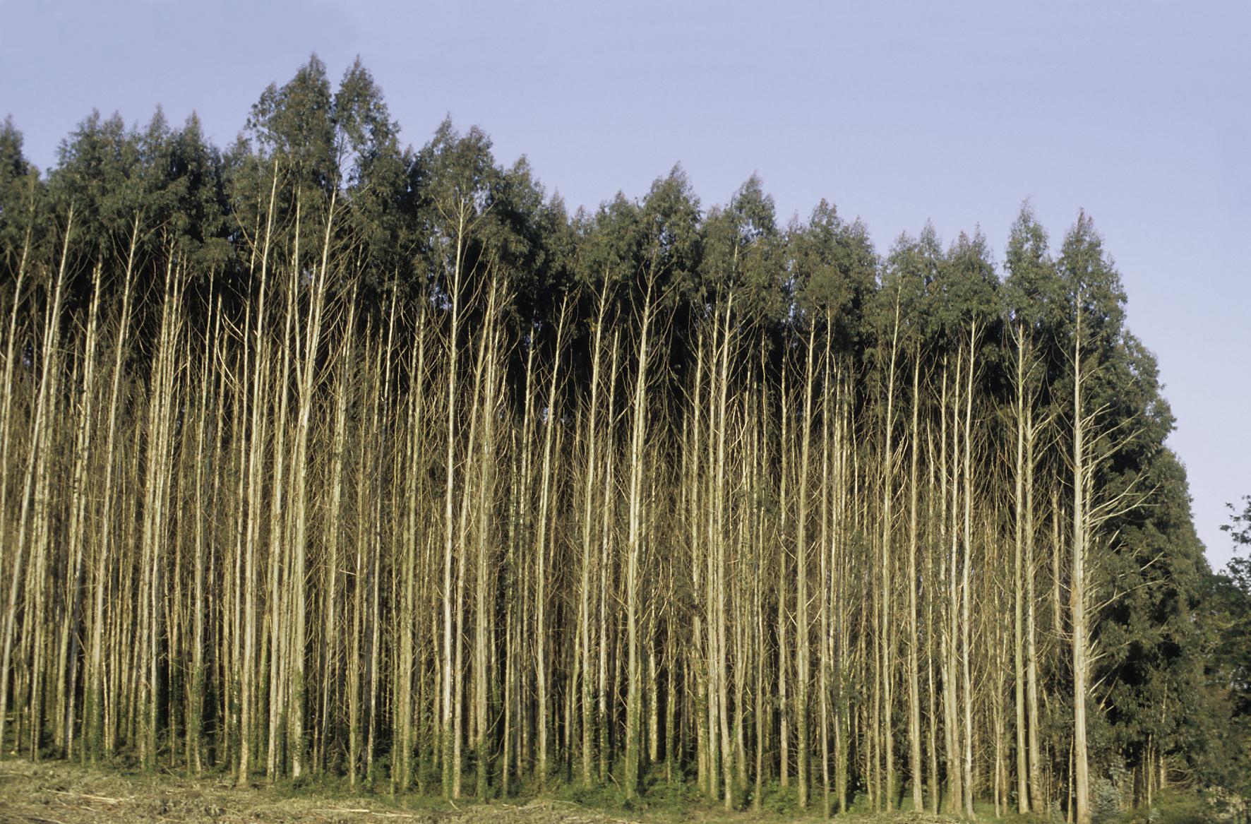 Nachhaltige Bioökonomie Wälder sind keine unerschöpflichen Quellen für Biomasse!
